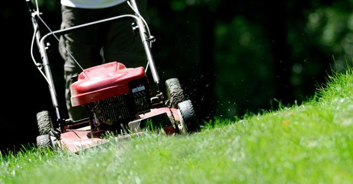 Top Die richtige Rasenpflege macht den Unterschied &DV_12